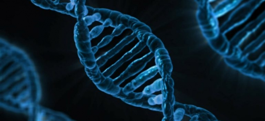 A Great Leap for Genetics - A Symphony in Our Cells